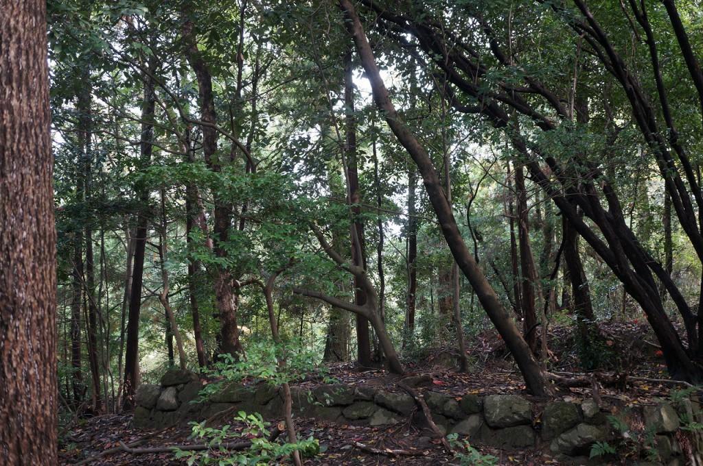 作業を始める前の状態。写真で見るより実際は木が生い茂り暗い感じです。