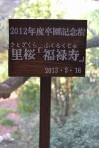 DSC_0396-20130320